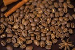 Σιτάρια της κινηματογράφησης σε πρώτο πλάνο καφέ Σύσταση του υπερβολικά μεγάλου arabica φασολιού Maragogype πολύ υψηλού - ποιότητ Στοκ Εικόνες