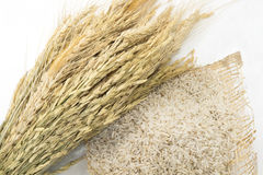 Σιτάρια του ταϊλανδικού ρυζιού Στοκ φωτογραφία με δικαίωμα ελεύθερης χρήσης
