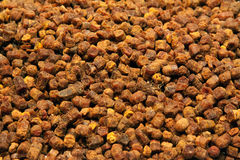 Σιτάρια Beebread Στοκ φωτογραφία με δικαίωμα ελεύθερης χρήσης