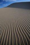 σιτάρι ερήμων Στοκ Φωτογραφία