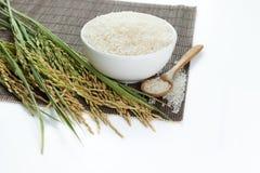 Σιτάρι ορυζώνα και ρυζιού στοκ εικόνα με δικαίωμα ελεύθερης χρήσης