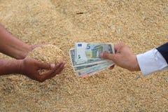 Σιτάρι ρυζιού εμπορικών συναλλαγών επιχειρηματιών Στοκ Εικόνες
