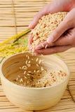 Σιτάρι ρυζιού στοκ εικόνες