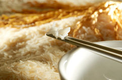 Σιτάρι ρυζιού στοκ φωτογραφίες με δικαίωμα ελεύθερης χρήσης