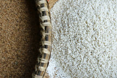 Σιτάρι ρυζιού Στοκ φωτογραφία με δικαίωμα ελεύθερης χρήσης