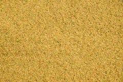 Σιτάρι ρυζιού στοκ εικόνα με δικαίωμα ελεύθερης χρήσης