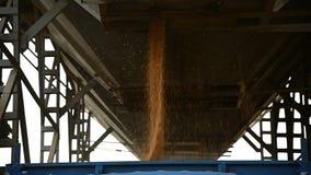 Σιτάρι σίτου φόρτωσης σε σε αργή κίνηση Συγκομιδή του σίτου σιταριού σε ένα ημιρυμουλκούμενο όχημα από μια χοάνη σιτοβολώνων Σιτά φιλμ μικρού μήκους