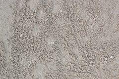 Σιτάρι του καβουριού στην άμμο στοκ εικόνες με δικαίωμα ελεύθερης χρήσης