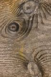 σιτάρι του ξύλου στοκ φωτογραφία με δικαίωμα ελεύθερης χρήσης