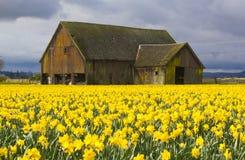 Σιταποθήκη και daffodils Στοκ εικόνα με δικαίωμα ελεύθερης χρήσης