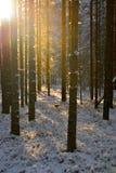 Σιωπή στα δάση Στοκ εικόνα με δικαίωμα ελεύθερης χρήσης