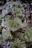 Σιωπηλός πάγος Παγωμένο υπόβαθρο εγκαταστάσεων στοκ εικόνα με δικαίωμα ελεύθερης χρήσης
