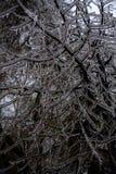 Σιωπηλός πάγος Παγωμένο υπόβαθρο εγκαταστάσεων στοκ φωτογραφία με δικαίωμα ελεύθερης χρήσης