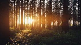 Σιωπηλό δάσος την άνοιξη με τις όμορφες φωτεινές ακτίνες ήλιων στοκ φωτογραφία