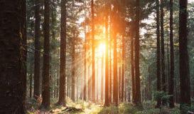 Σιωπηλό δάσος την άνοιξη με τις όμορφες φωτεινές ακτίνες ήλιων στοκ εικόνες με δικαίωμα ελεύθερης χρήσης