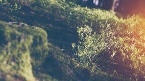 Σιωπηλό δάσος την άνοιξη με τις όμορφες φωτεινές ακτίνες ήλιων απόθεμα βίντεο