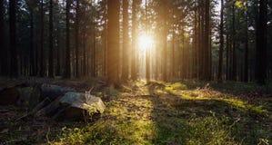 Σιωπηλό δάσος την άνοιξη με το όμορφο φωτεινό φως ήλιων στοκ εικόνες