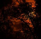Σιωπηλά μεσάνυχτα Στοκ εικόνες με δικαίωμα ελεύθερης χρήσης