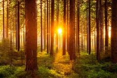 Σιωπηλό δάσος την άνοιξη με τις όμορφες φωτεινές ακτίνες ήλιων στοκ φωτογραφία με δικαίωμα ελεύθερης χρήσης