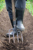 Σκάβοντας χώμα άνοιξη με το φτυάρι Στοκ Εικόνα