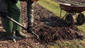 Σκάβοντας χώμα κηπουρών γυναικών με το δίκρανο κοντά wheelbarrow Έννοια κηπουρικής απόθεμα βίντεο