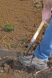 σκάβοντας χώμα Στοκ Εικόνες