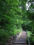 Σκάλα που καταλήγει στο πάρκο μεταξύ των δέντρων στοκ εικόνες