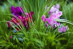 Σκάστε του ροζ Στοκ εικόνα με δικαίωμα ελεύθερης χρήσης