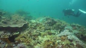 σκάφανδρο δυτών υποβρύχι&omic Φιλιππίνες, Mindoro απόθεμα βίντεο