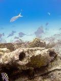 σκάφανδρο κατάδυσης στοκ φωτογραφία με δικαίωμα ελεύθερης χρήσης