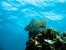 σκάφανδρο πλήκτρων divinga στοκ εικόνα