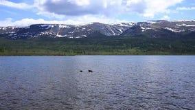 Σκάφανδρο που βουτά σε μια λίμνη βουνών, τεχνικές άσκησης για τους σωτήρες έκτακτης ανάγκης βύθιση στο κρύο νερό απόθεμα βίντεο