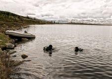 Σκάφανδρο που βουτά σε μια λίμνη βουνών, τεχνικές άσκησης για τους σωτήρες έκτακτης ανάγκης βύθιση στο κρύο νερό στοκ εικόνες με δικαίωμα ελεύθερης χρήσης