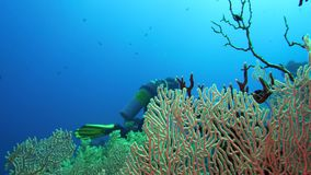 Σκάφανδρο που βουτά στα νερά της Ερυθράς Θάλασσας Αίγυπτος φιλμ μικρού μήκους