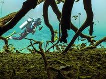 Σκάφανδρο που βουτά σε Cenote Στοκ φωτογραφία με δικαίωμα ελεύθερης χρήσης