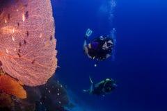 Σκάφανδρο που βουτά στην Ταϊλάνδη Στοκ Εικόνες