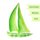 Σκάφος μπιζελιών Πράσινα μπιζέλια Watercolor Συρμένη χέρι ζωγραφική watercolor στο άσπρο υπόβαθρο, διανυσματική απεικόνιση Στοκ Εικόνες