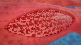 Σκάφος ροής κυττάρων αίματος στο τμήμα ελεύθερη απεικόνιση δικαιώματος
