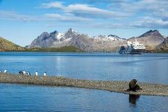 Σκάφος της γραμμής κρουαζιέρας στη νότια Γεωργία με τα penguins, σφραγίδα Στοκ Εικόνες