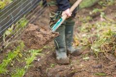 Σκάψιμο ατόμων με το φτυάρι στον κήπο Στοκ εικόνες με δικαίωμα ελεύθερης χρήσης