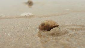 Σκάψιμο καβουριών ερημιτών στην άμμο απόθεμα βίντεο