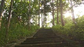 Σκάλα κινήσεων καμερών πέτρινη επάνω στο τροπικό πάρκο απόθεμα βίντεο