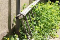 Σκάλα μεταξύ των εγκαταστάσεων σε έναν κήπο Στοκ Εικόνες