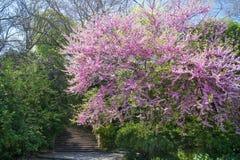 Σκάλα σε έναν παλαιό κήπο Στοκ Εικόνες