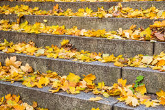 Σκάλα φθινοπώρου Στοκ Φωτογραφία