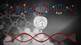 Σκέλη εγκεφάλου και DNA διανυσματική απεικόνιση