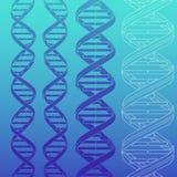 σκέλη DNA Στοκ εικόνες με δικαίωμα ελεύθερης χρήσης