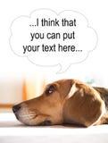 Σκέψεις του σκυλιού Στοκ εικόνες με δικαίωμα ελεύθερης χρήσης