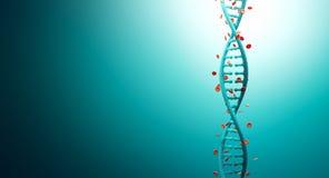 Σκέλη DNA με την αιμογλοβίνη Στοκ εικόνα με δικαίωμα ελεύθερης χρήσης