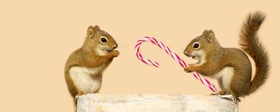 Σκίουροι Χριστουγέννων. στοκ εικόνες με δικαίωμα ελεύθερης χρήσης